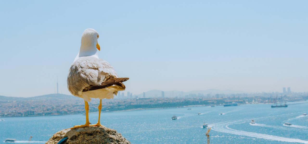Яхтинг в Турции: где арендовать яхту, в какой парусной школе учиться и когда собираться на регату